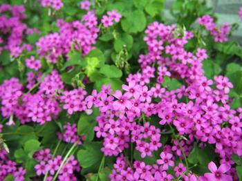 花 フリー画像 フリー 写真
