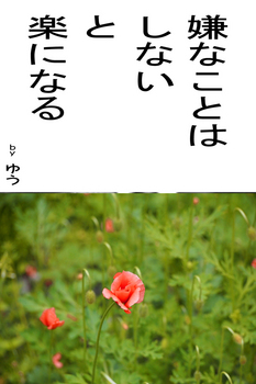 sonet-b-iyanakotowa-sinai02.jpg