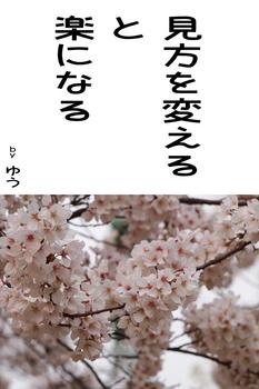 sonet-b-sakura02-640.jpg