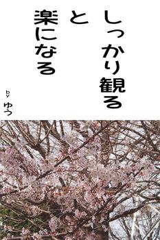 sonet-b-sikarimiru02.jpg